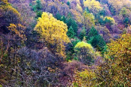 六盘山国家森林公园