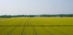 我县将新增11.35万亩高标准基本农田