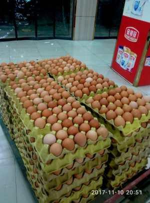 鲜鸡蛋 养殖场专_x005f_x0008_供