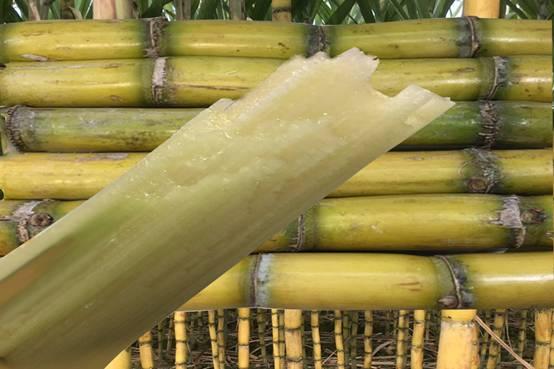 水果甘蔗--物茂乡