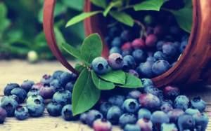 酉阳唯一一家蓝莓种植商