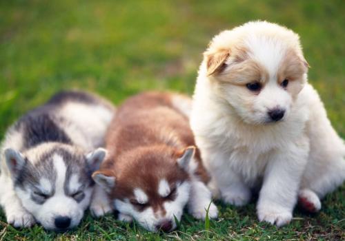 《嘉峪关市养犬管理条例(草案)》开始向社会公开征求意见