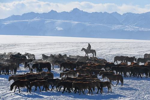 新疆:伊犁冬韵
