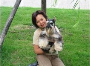 33年的专业繁殖品牌成都出售极品迷你雪纳瑞幼犬